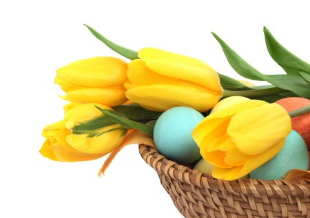 Colorful easter eggs in basket and tulips isolated on white corner composition photo