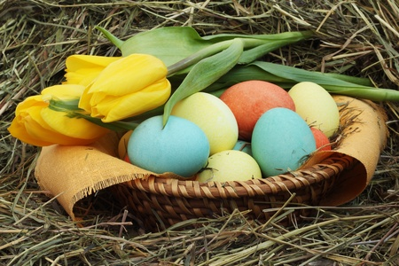 Basket of colored easter eggs and tulips on hay photo