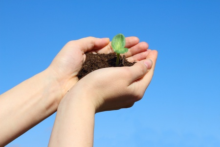Sapling in female hands on sky background photo