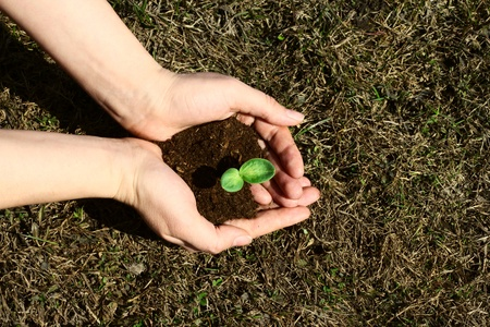 Small green sapling in female hands Stock Photo