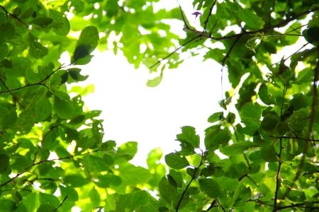 natural light: Hermosas hojas de antecedentes amor concepto de naturaleza Foto de archivo