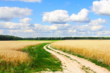 Village road in wheat field under cloudy sky photo