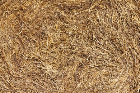 Dry hay texture background macro close up photo