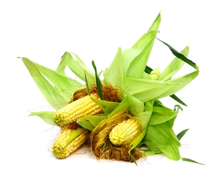 Three ears of corn isolated on a white background  photo