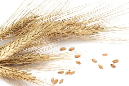 小麦の穂と白い背景で隔離の穀物