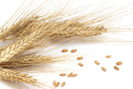 Wheat ears and grains isolated on white background  photo
