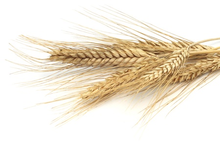 Wheat ears isolated on white background  Stock Photo