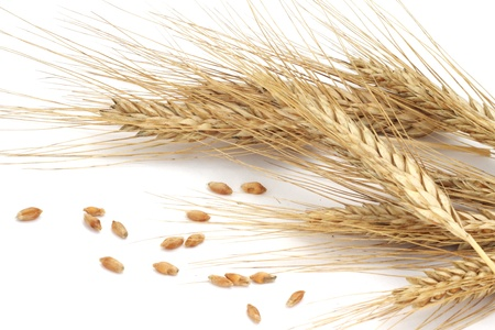 Wheat ears and grains isolated on white background  Stock Photo