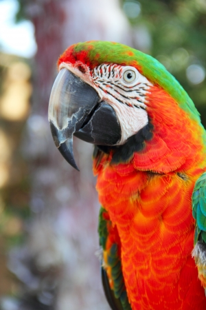Portrait of a beautiful colorful Macaw parrot close-up photo