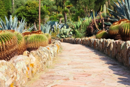cereus: Road in cultivated cactus garden, Spain Stock Photo