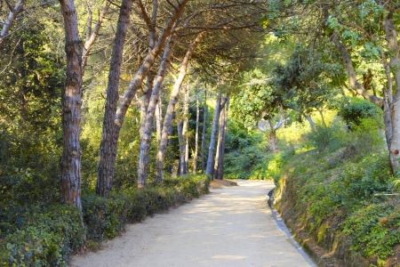 Road in park with tropical plants and trees, Spain photo