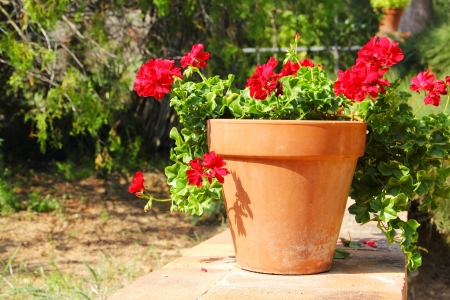 Red flower in pot standing in garden outdoors photo