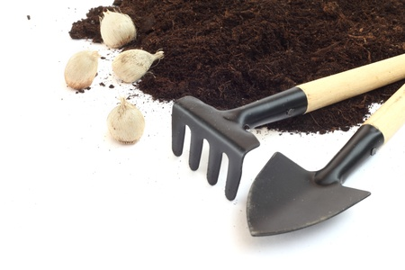 Gardening tools and flower bulbs isolated on white photo