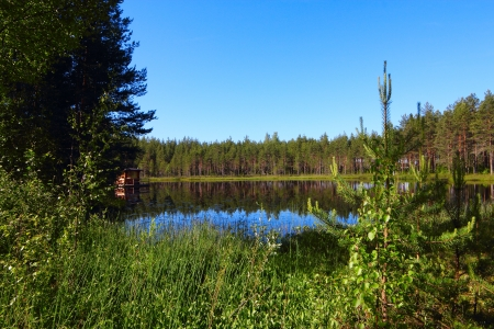 north woods: Blue Lake in the north woods at sunny day