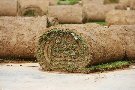 Turf grass rolls partially unrolled close up photo