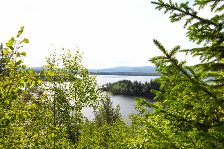 View on fjord from forest at summer in northern Norway photo