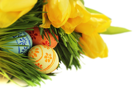 Easter eggs in green spring grass with yellow tulips on white background