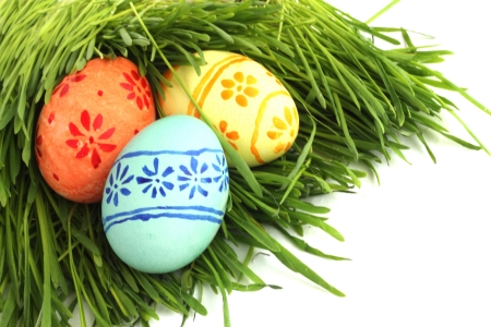 Easter eggs in green spring grass on white background photo