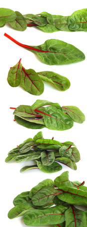 Mangold salad or Sweet beet leafs isolated on white background Stock Photo