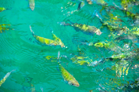 Photo of a tropical Fish in transparent blue sea water close-up photo