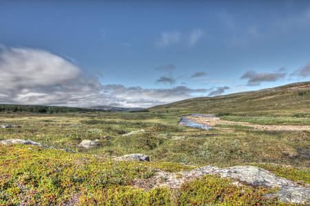 夏に北ノルウェーの美しいツンドラの風景