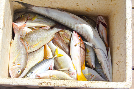 Catch of tropical fish of Thailand  in box photo