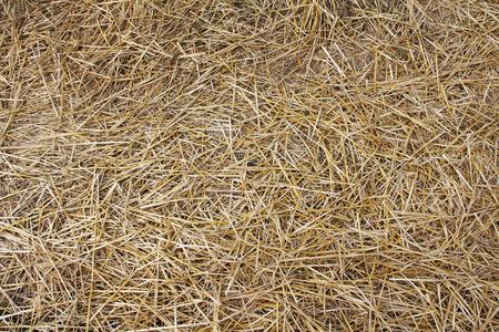 Dry hay texture macro close up photo