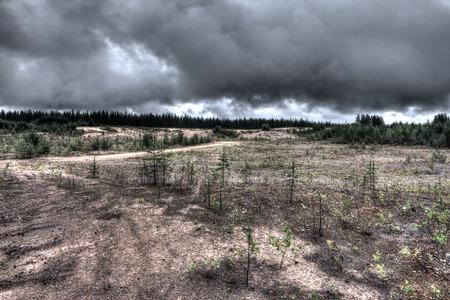 sandy soil: Paesaggio del Nord con piccoli pini che crescono dal terreno sabbioso Archivio Fotografico