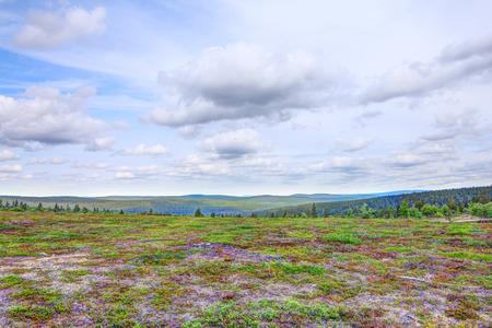 ラップランド、フィンランドの美しい夏のツンドラを風景します。