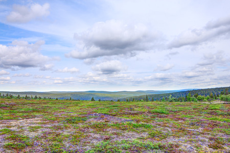 Beautiful summer tundra landscape in Lapland, Finland