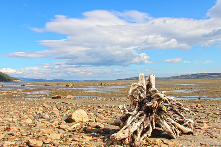 Summer arctic landscape with lake, mountains and dry tree root photo