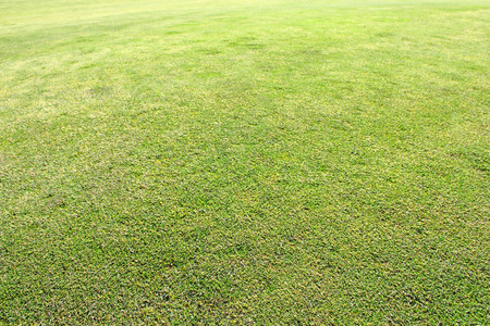 Green Grass on golf course, close-up view Stock Photo