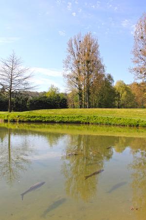 salmo trutta: The brown trout (Salmo trutta) in clear transparent pond