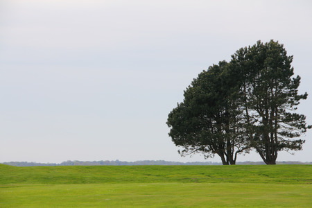 nasty: Lonely trees on green plain field at nasty summer day Stock Photo