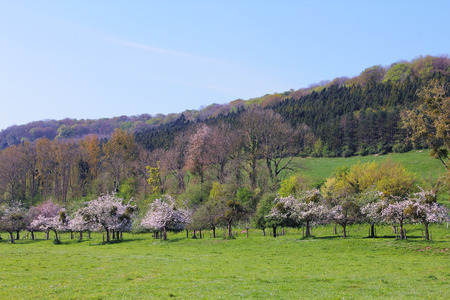 Landscaped spring field and apple trees in valley of Normandy, France