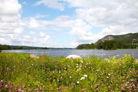 Beautiful landscape with fjord and summer flowers in Norway photo