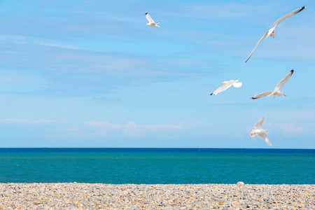 Seagulls flying over pebble beach in Normandy, France photo