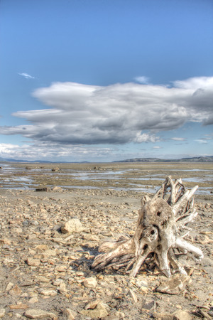 inclement: Summer arctic landscape with lake, mountains and dry tree root