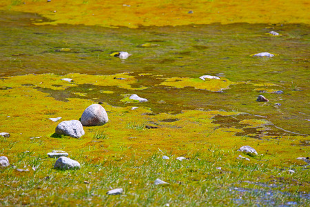 shallow: Shallow of glacial river with colorful moss, Norway