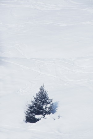 ski traces: Slope with ski traces in beautiful winter mounatins