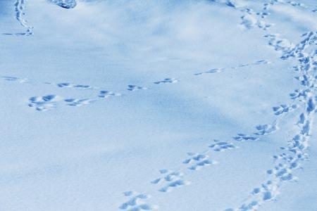 huellas de animales: Pistas animales en nieve fresca, natural de fondo