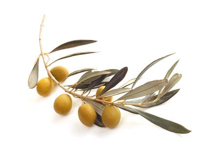 rama de olivo: Aceitunas frescas en la rama de oliva aislados en el fondo blanco
