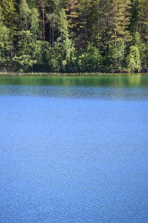 美しいスウェーデンの美しい森の海岸で観湖ヴェッテーン