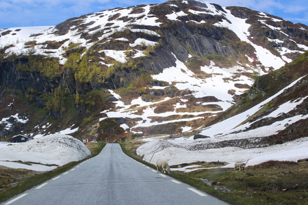 Road in Spring mountains with melting snow and trees in Norway, Stolsheimen
