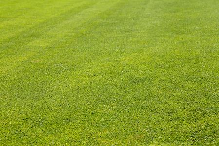 Golf Course green grass textured background close up