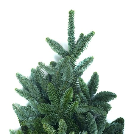 Traditional green christmas tree noble fir isolated on white background copy space for text 免版税图像
