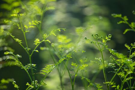 Young fern leaf in sunlight natural forest background Standard-Bild