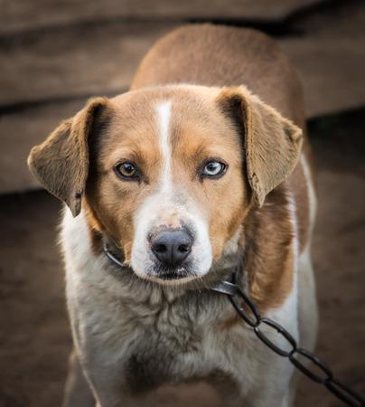 cruelty: Dog in captivity Stock Photo