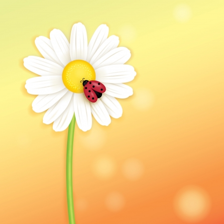 Flower card background photo