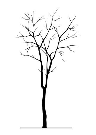 葉のない木のシルエット